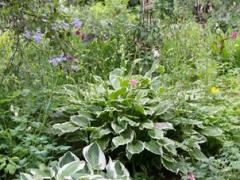 trädgårdsgalleri-5-Copy.jpg